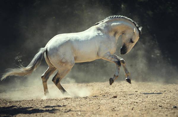 Photograph - Fun In The Dust by Ekaterina Druz