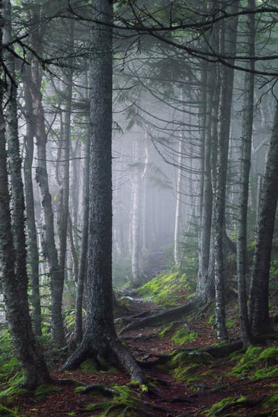 Fundy Fog Art Print