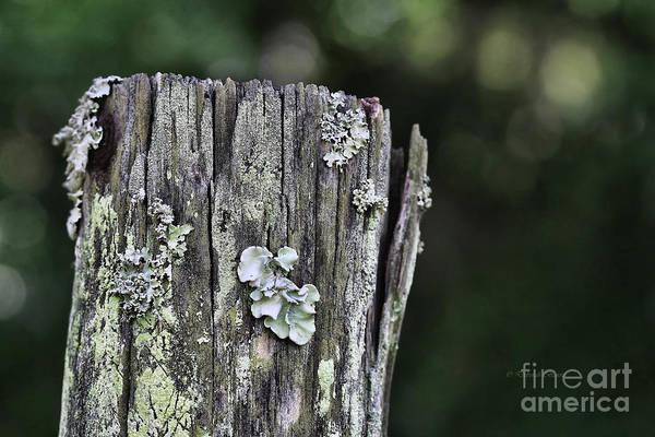 Photograph - Fungi Green by Deborah Benoit
