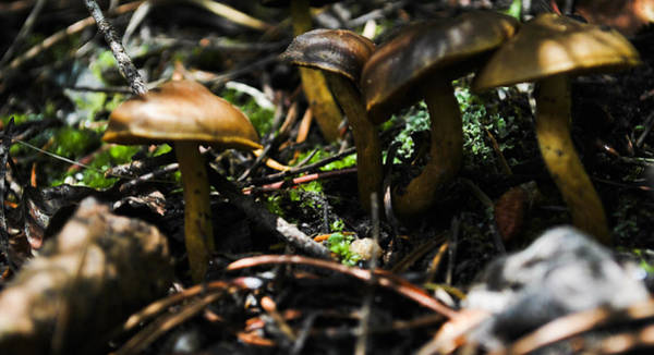 Shrooms Photograph - Fungus by Matthew Fredricey