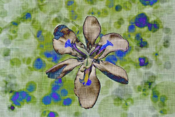 Photograph - Funky Iris by Alison Frank