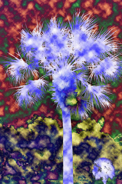 Photograph - Funky Palmetto 1 by Stacey Rosebrock