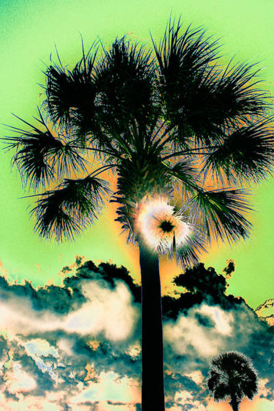 Photograph - Funky Palmetto 2 by Stacey Rosebrock