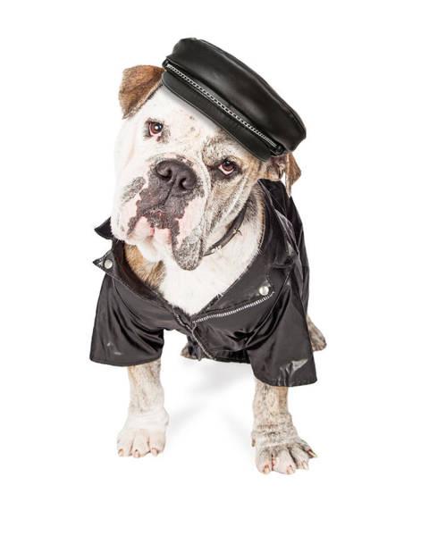 Wall Art - Photograph - Funny Biker Bad Bulldog Breed Dog by Susan Schmitz