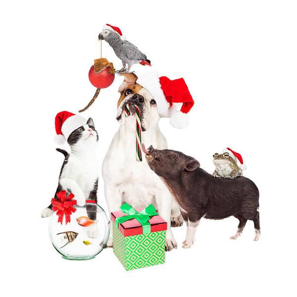 Wall Art - Photograph - Funny Christmas Pet Compositie by Susan Schmitz