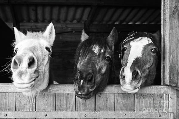 Wall Art - Photograph - Funny Horses by Delphimages Photo Creations