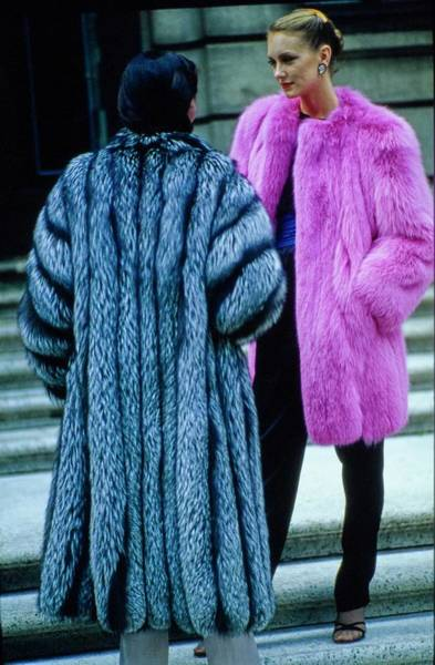 Photograph - Fur Fit Pink And Silver by Douglas Hopkins
