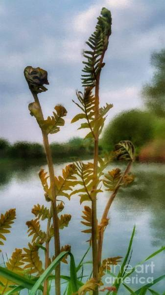Mixed Media - Furled by Abbie Shores