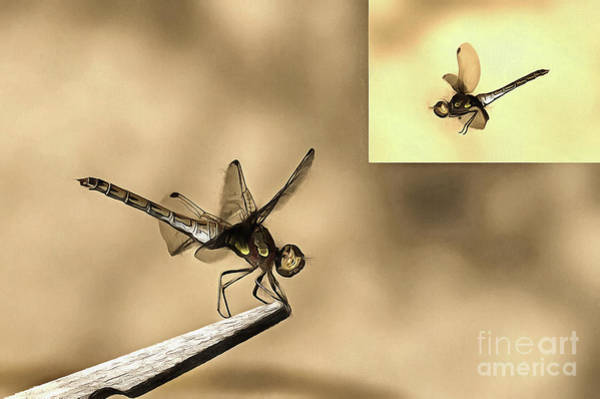 Painting - Furniture And Flying Dragonfly by Odon Czintos
