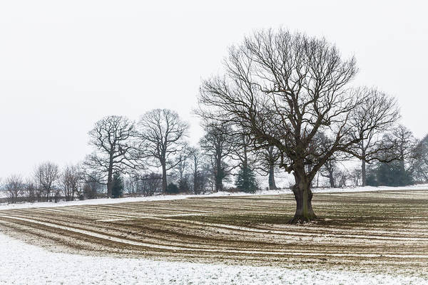 Photograph - Furrows In The Snow 1 by Raelene Goddard
