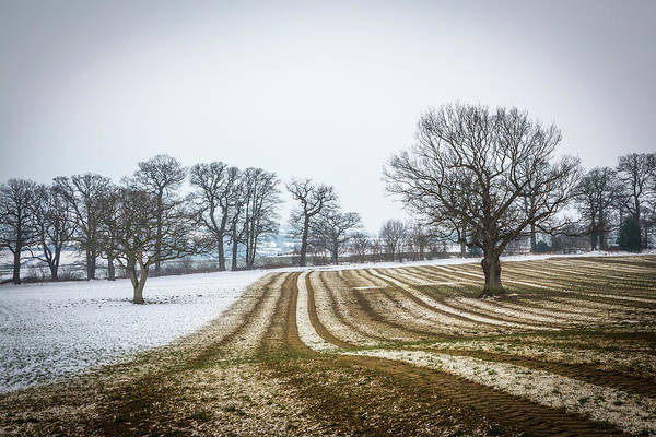 Photograph - Furrows In The Snow 2 by Raelene Goddard