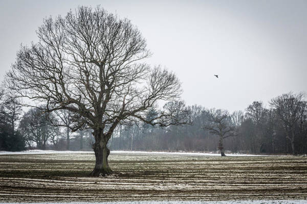 Photograph - Furrows In The Snow 3 by Raelene Goddard