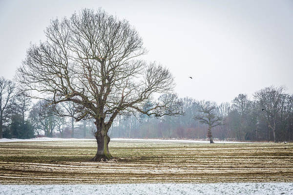 Photograph - Furrows In The Snow 4 by Raelene Goddard