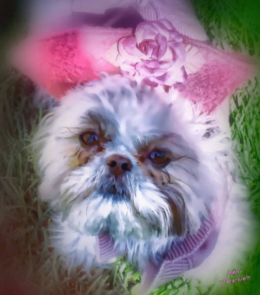 Photograph - Furry Angel by Kathy Tarochione