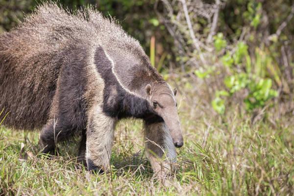 Photograph - Furry Friend by Alex Lapidus
