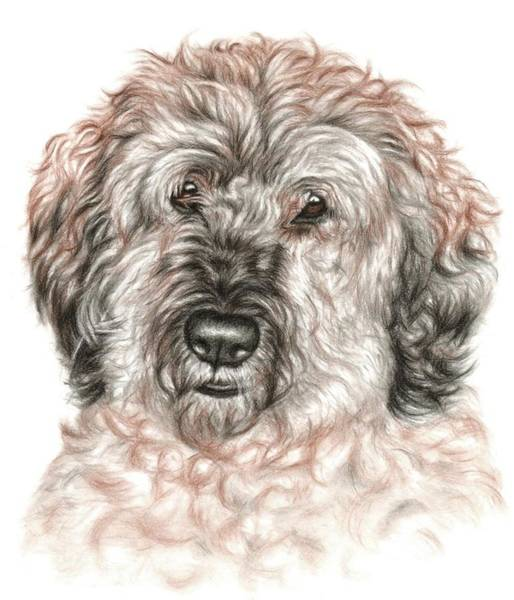 Furry Drawing - Furry Friend by Nicole Zeug