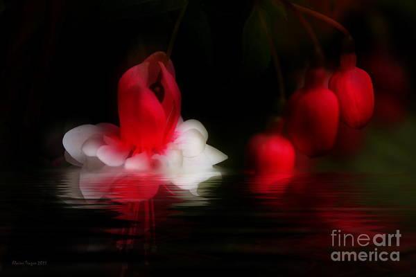 Photograph - Fuschia Reflections by Elaine Teague
