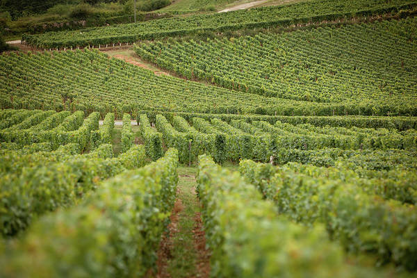 Photograph - Future Wine by John Magyar Photography