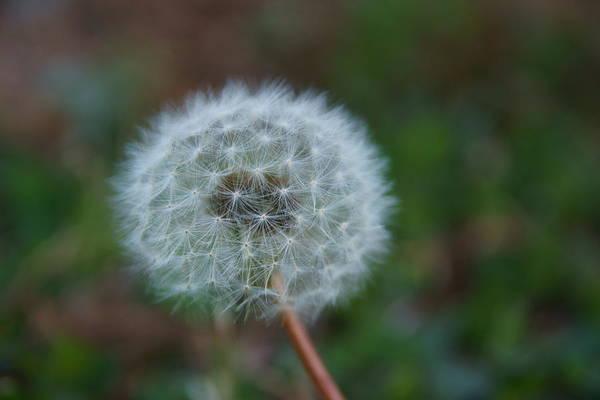 Photograph - Fuzzy Globe 1 by Dimitry Papkov