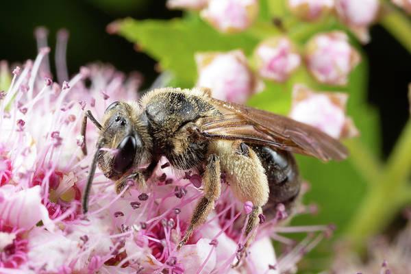 Photograph - Fuzzy Leg Pollen by Brian Hale