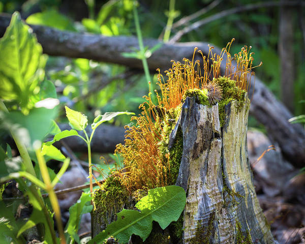 Wall Art - Photograph - Fuzzy Stump by Bill Pevlor