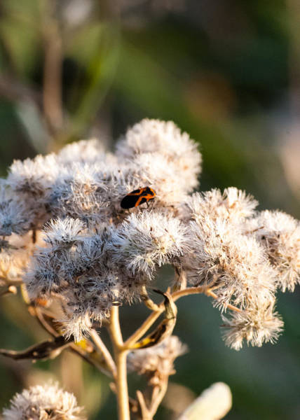 Photograph - Fuzzy With Bug by Tom Potter