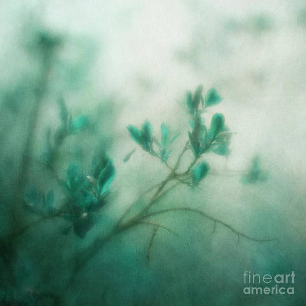 Wall Art - Photograph - In The Deep Forest 3 by Priska Wettstein