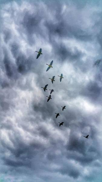 Shore Bird Digital Art - Gaggle Of Geese by Abbie Shores