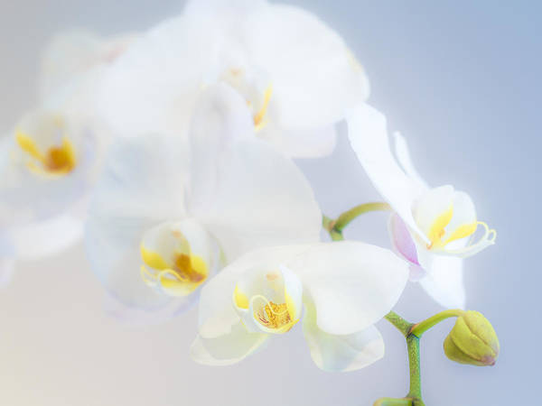 Wall Art - Photograph - Gail's Orchids by Jade Moon