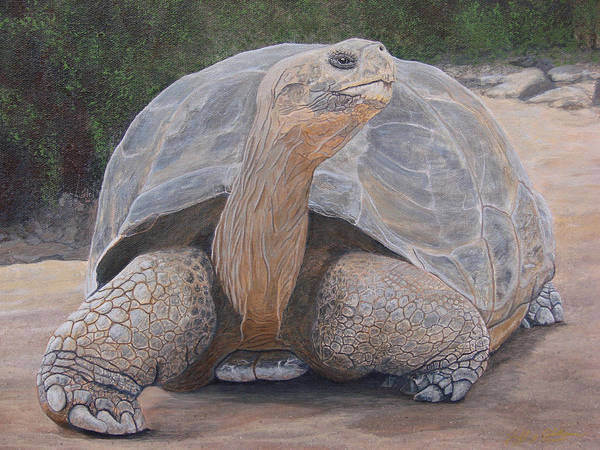 Painting - Galapagos Tortoise by Jeffrey Oldham