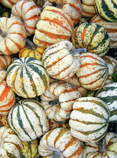 Photograph - Galena Gourds by Todd Klassy