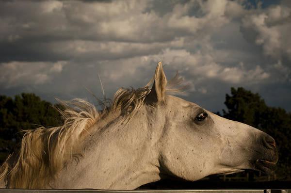 Photograph - Galisteo 8 by Catherine Sobredo