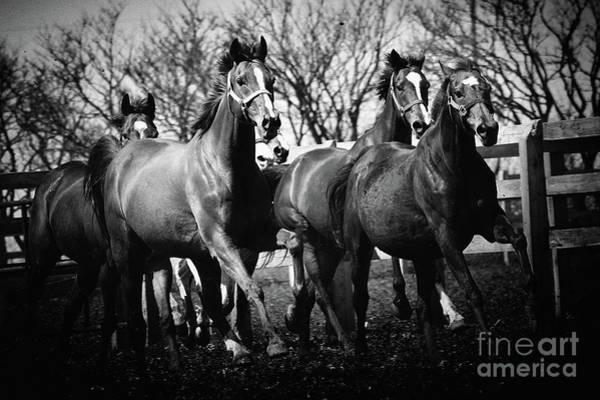 Photograph - Galloping Horses by Dimitar Hristov