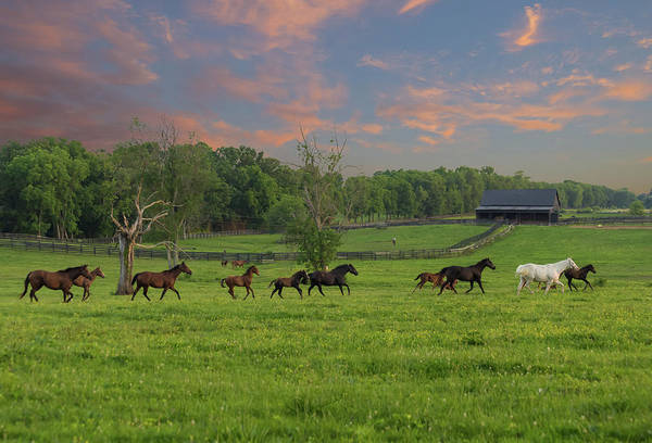 Bluegrass Photograph - Galloping In The Kentucky Bluegrass by Bridget Calip