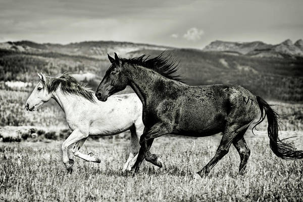 Photograph - Galloping Through The Wyoming Scenery In Black And White by Kay Brewer