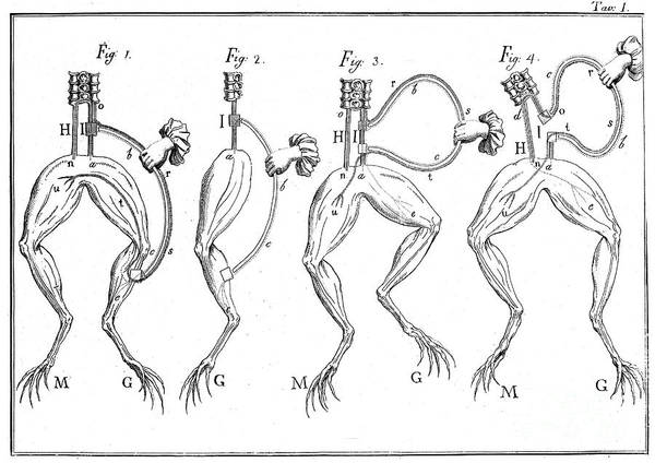 Photograph - Galvanis Frog Experiments, 18th C by Wellcome Images