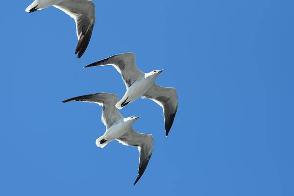 Wall Art - Photograph - Galveston Birds 212 by Lawrence Hess