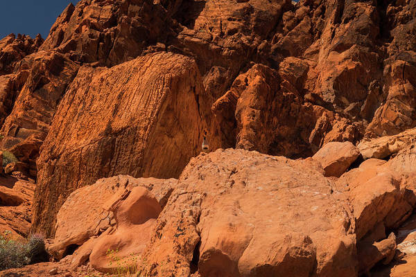 Wall Art - Photograph - Gambels Quail Valley Of Fire by Frank Wilson