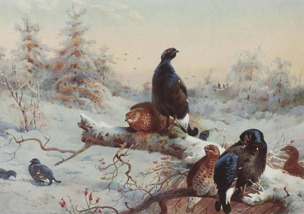 Wall Art - Painting - Game Birds  by Archibald Thorburn