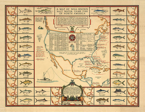 Angling Wall Art - Drawing - Game Fishing Chart Of North America - Game Fish Varieties - Illustrated Map For Anglers by Studio Grafiikka