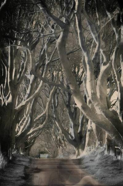 Wall Art - Photograph - Game Of Thrones Trees by John Hughes