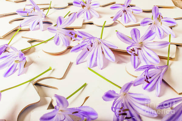 Agapanthus Photograph - Games Of Romance by Jorgo Photography - Wall Art Gallery