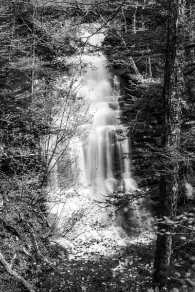 Photograph - Ganoga Falls - 8907 by G L Sarti