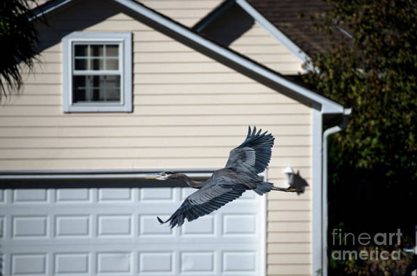 Photograph - Garage Door Take Off by Dale Powell