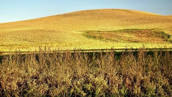 Photograph - Garbanzo Hillside by Jerry Sodorff