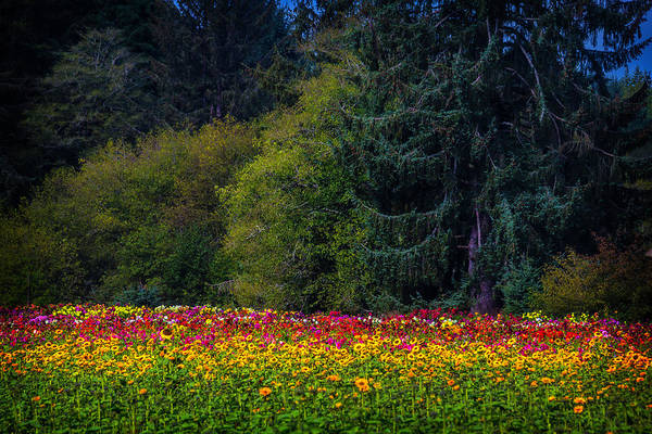 Wall Art - Photograph - Garden And Forest by Garry Gay