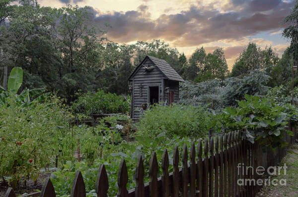 Photograph - Garden And Shed by Dale Powell