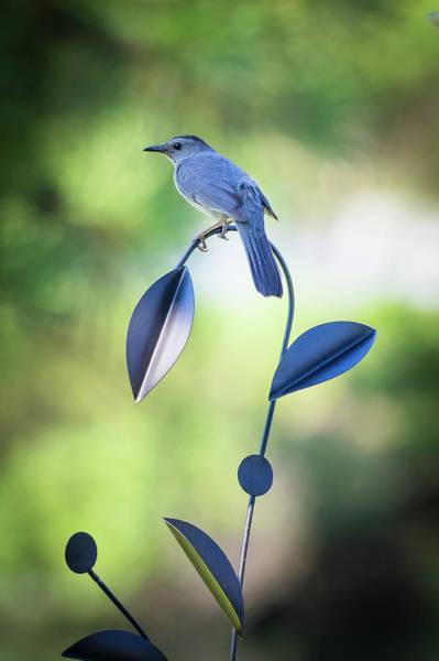 Photograph - Garden Art by Van Sutherland