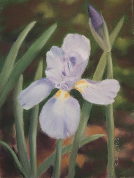 Pastel - Garden Beauty by Carol Corliss