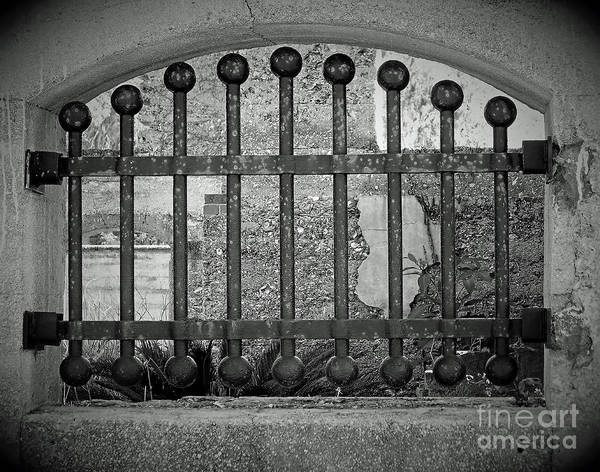 Photograph - Garden Behind The Wrought Iron by D Hackett